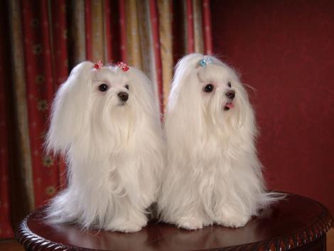 wie viel kostet ein hunde harrschnitt hund kosten haarschnitt. Black Bedroom Furniture Sets. Home Design Ideas
