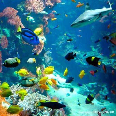 Korallenriff - (Fische, Aquarium, Meer)