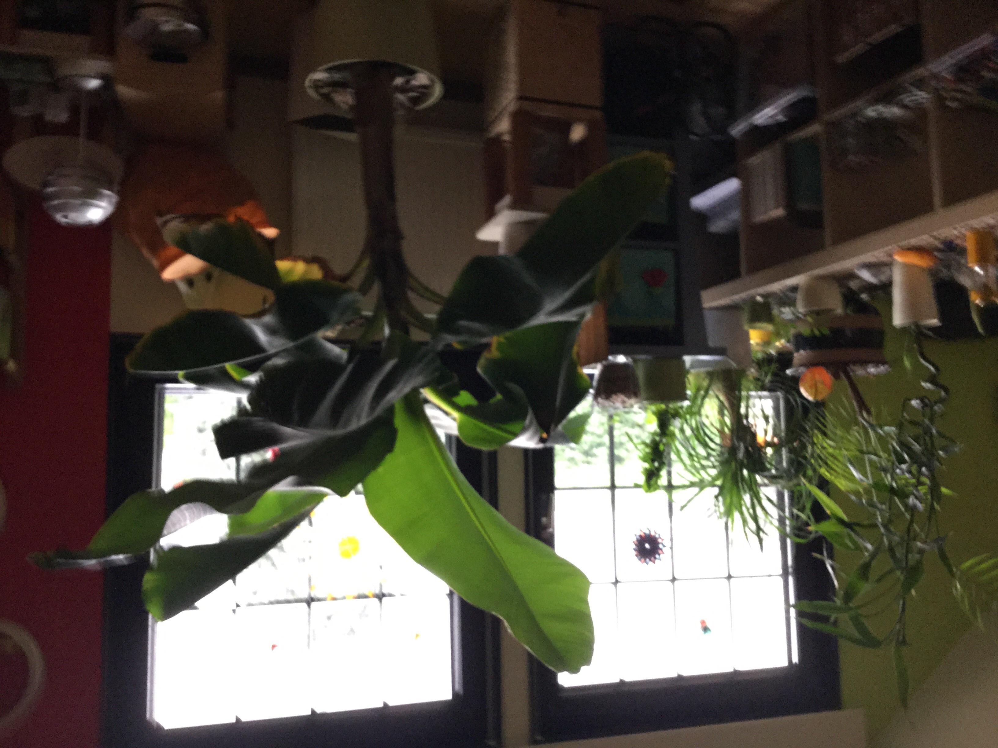 wie viel sauerstoff produzieren diese paar pflanzen gesundheit physik biologie. Black Bedroom Furniture Sets. Home Design Ideas