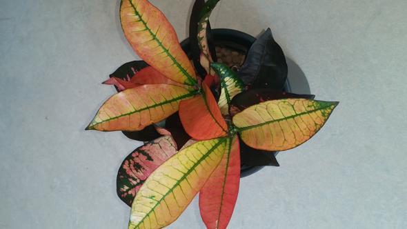 wie viel sonne tut diesen pflanzen gut siehe bilder licht pflanzenpflege. Black Bedroom Furniture Sets. Home Design Ideas