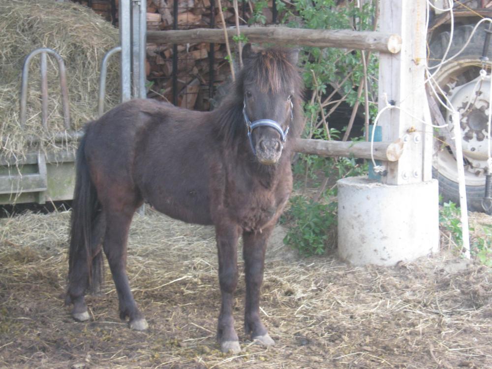 wie viel w chst mein pony noch pferde reiten. Black Bedroom Furniture Sets. Home Design Ideas