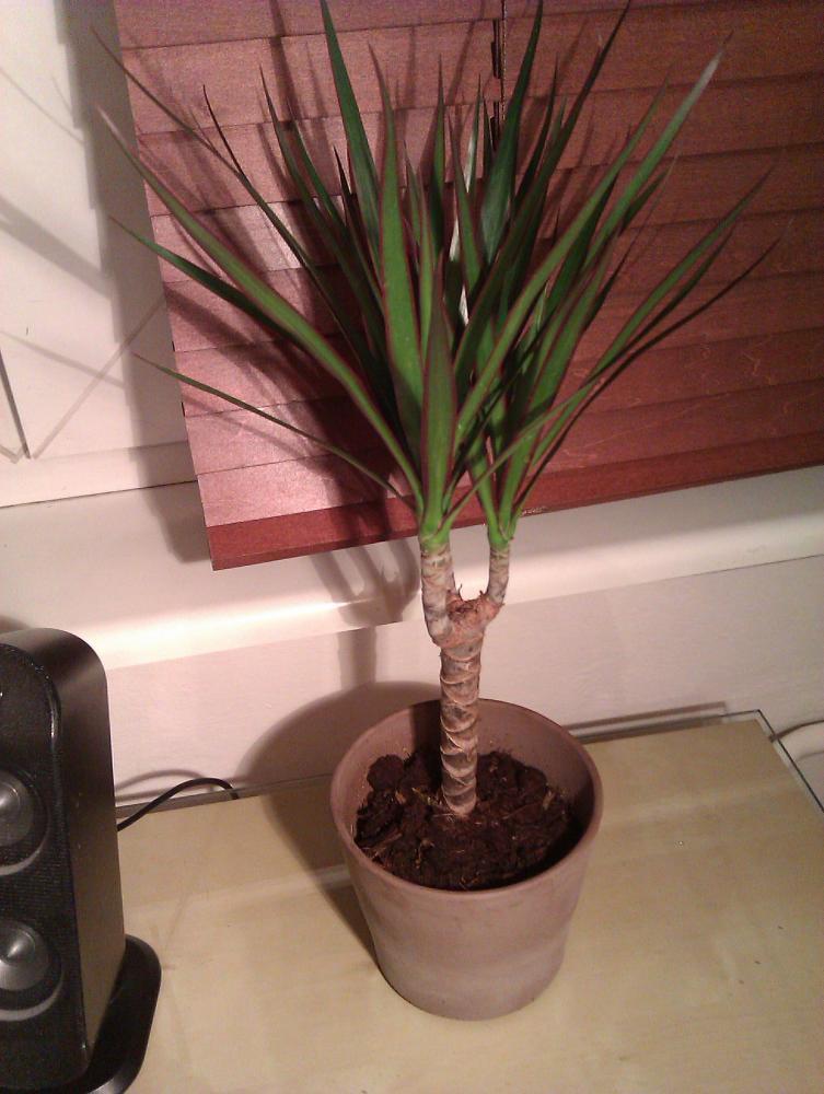wie viel wasser braucht diese pflanze pflanzen botanik. Black Bedroom Furniture Sets. Home Design Ideas