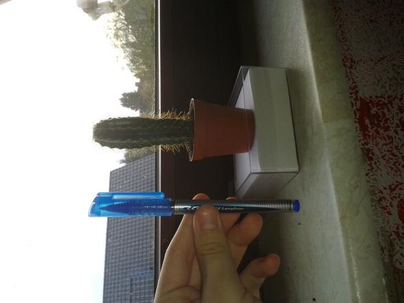wie viel wasser braucht ein kaktus pflanzenpflege kakteen. Black Bedroom Furniture Sets. Home Design Ideas