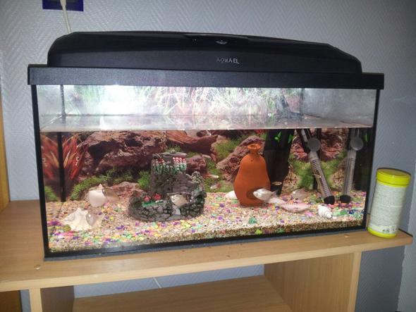 viele Fische anmelden