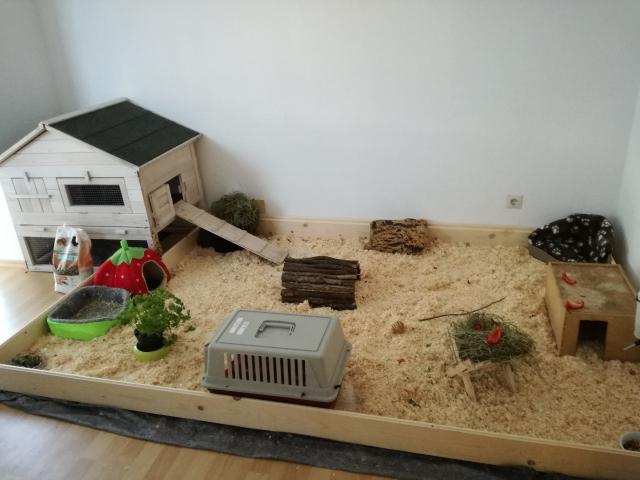 wie viele meerschweinchen w rdet ihr in diesem k fig halten haustiere gehege auslauf. Black Bedroom Furniture Sets. Home Design Ideas