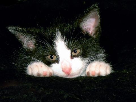 - (Katze, Katzen)