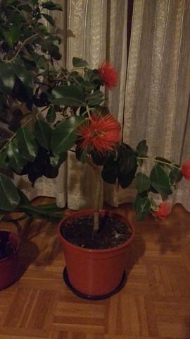 Die Pflanze - (Pflanzen, Botanik)