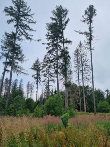Wie wird unser Wald in Zukunft aussehen?