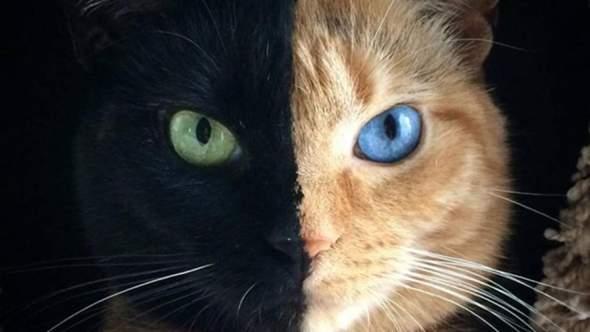 Wie würdet ihr diese Katze Nennen? (Nur WaCa Namen)?