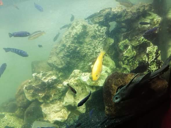 - (Aquarium, Einrichtung)