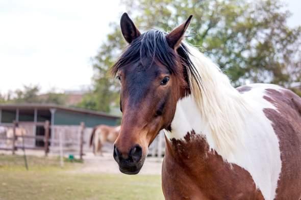 Wie würdet ihr dieses Pferd nennen?