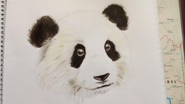 Panda - (zeichnen, malen)