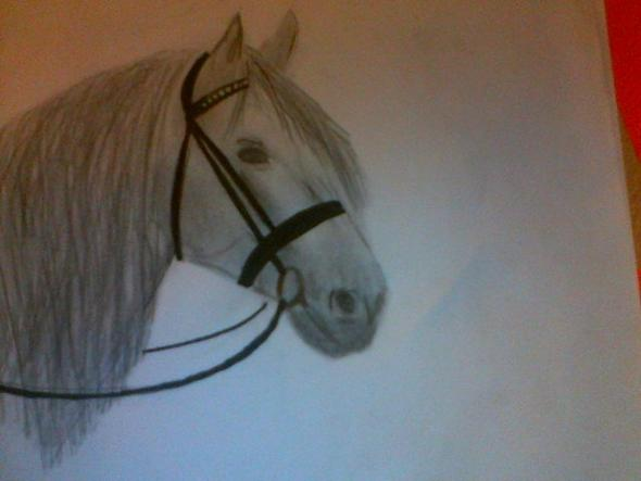 Wie Zeichnet Man Ausdrucksvolle Pferdeaugen Pferde Zeichen Ausdruck