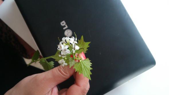 weiße blüten - (Schule, Garten, Pflanzen)