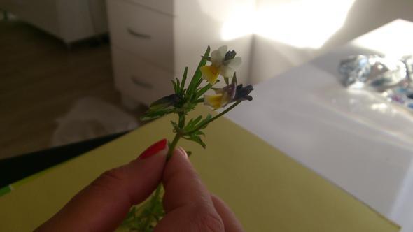 wunderhübsch, aber was ist das?? - (Schule, Garten, Pflanzen)