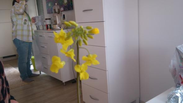 gelbe Luzerne, oder?? - (Schule, Garten, Pflanzen)