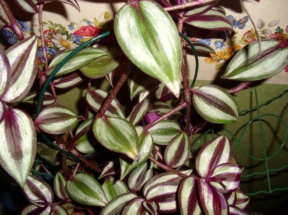 Schling-Pflanze - (Pflanzen, Blumen)