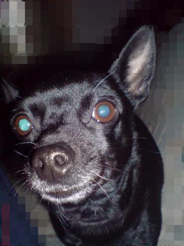 wieso hat mein hund blaue augen wenn ich sie fotografiere tiere foto fotografieren. Black Bedroom Furniture Sets. Home Design Ideas