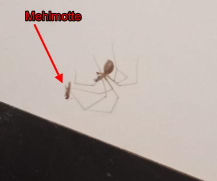 Wieso ist das Netz meiner Spinne nicht erfolgreich?