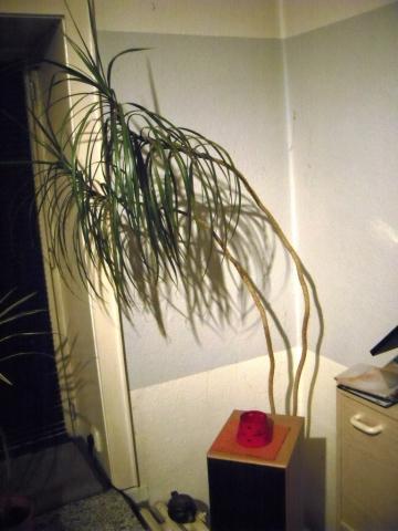 - (Pflege, Pflanzen)