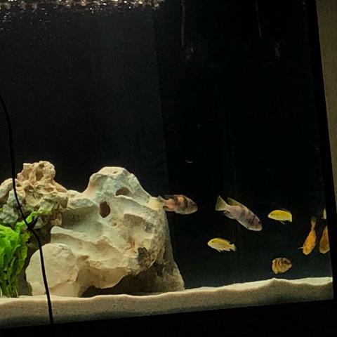 Fische in der Ecke. - (Tiere, Fische, Aquarium)