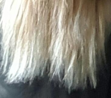 Haarspitzen hinten  - (Haare, Friseur, schneiden)