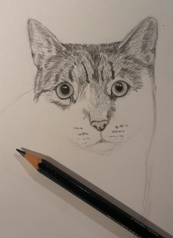 Bleistift - (Preis, Zeichnung)