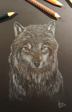 Buntstift - (Preis, Zeichnung)