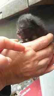wildkatzen als haustier junge baby s haustiere wild halten. Black Bedroom Furniture Sets. Home Design Ideas