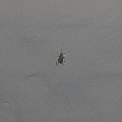 winzige krabbeltierchen im haus blattlaus insekten sch dlinge blattl use. Black Bedroom Furniture Sets. Home Design Ideas