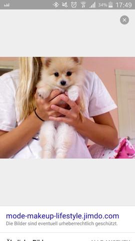 Ich finde siesem kleinen hund echt sehr süß - (Tiere, Hund)