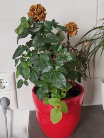 Wird die Pflanze noch blühen?