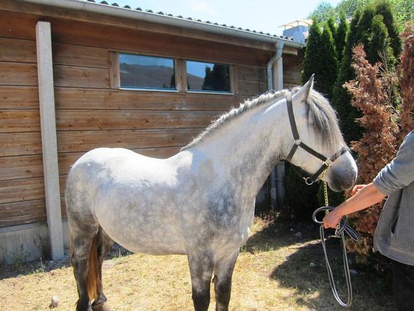 Pferd - (Pferde, Farbe, reiten)