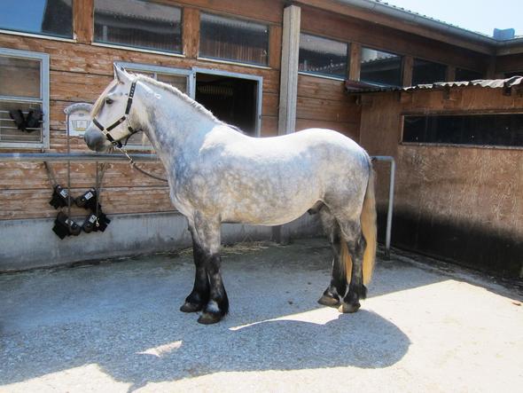 Pferd2 - (Pferde, Farbe, reiten)