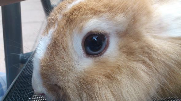 1. Auge - (Kaninchen, Tierarzt, Hasen)