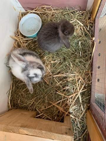 - (Tiere, Haustiere, Kaninchen)