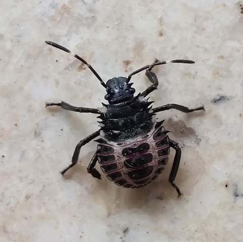 Do you know what this insect is?