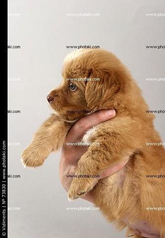 Hund 1 - (Hund, braun, klein)