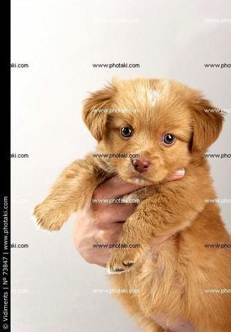 Hund 2 - (Hund, braun, klein)