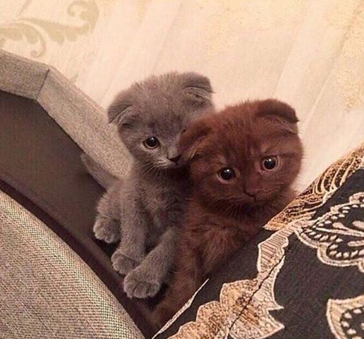 Die Katzen - (Katze, Haustiere, Katzen)