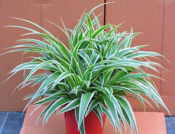 Bild - (Name, Pflanzen)