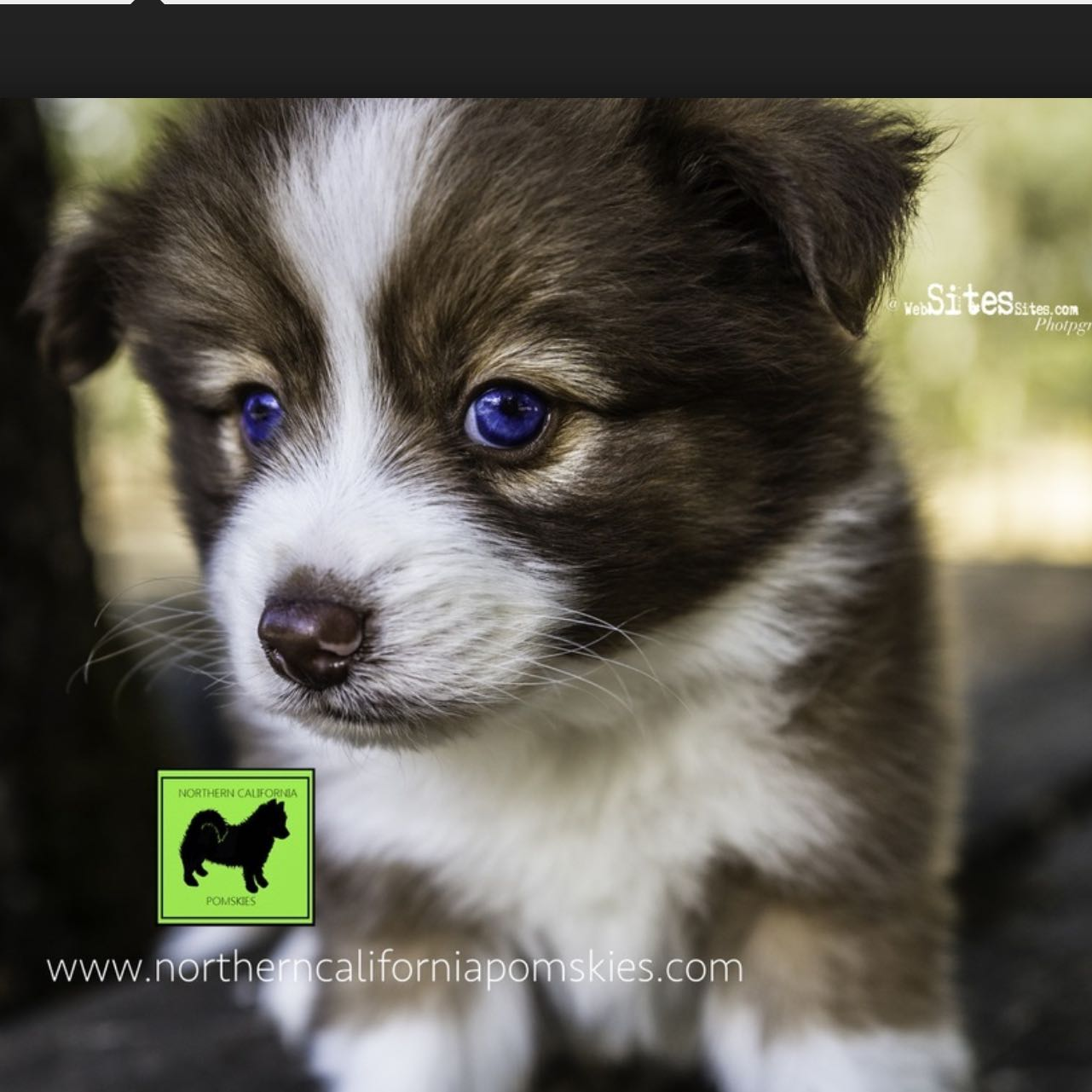 Wisst Ihr Wo Ich Einen Pomsky Herbekomme Tiere Hund Husky