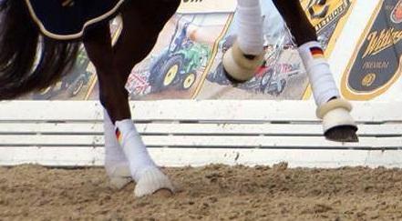 Finde sie nirgends.. - (Pferde, reiten)