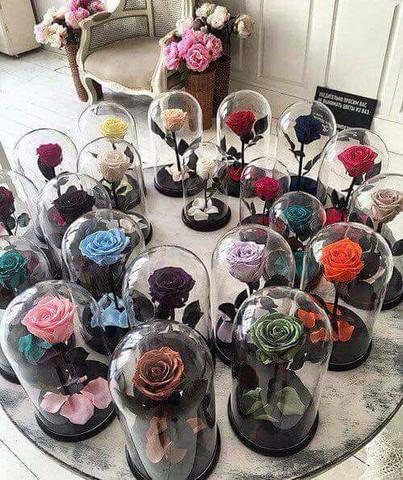 Man seiner viele freundin rosen schenkt wie Welche Blumen