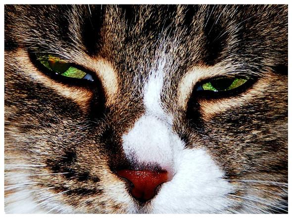 Katze - (Bauernhof, Mäusefängerin)