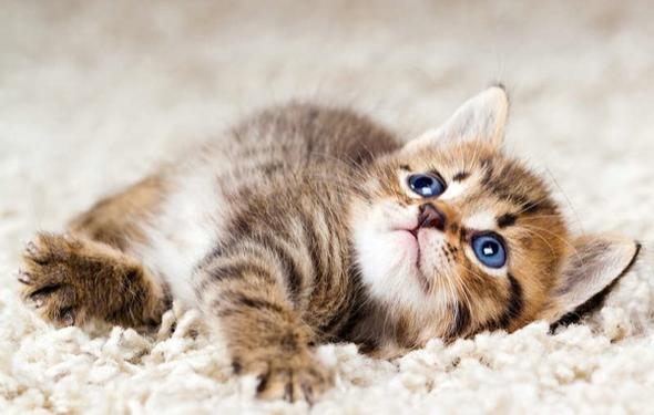 wo finde ich so eine babykatze katze katzen. Black Bedroom Furniture Sets. Home Design Ideas