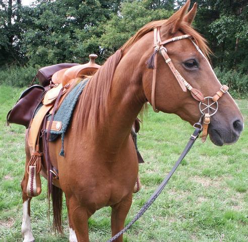 der LG-zaum - (Pferde, reiten, Optik)