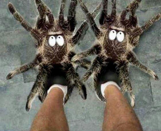 Wo findet man diese Hausschuhe (Spinnen)