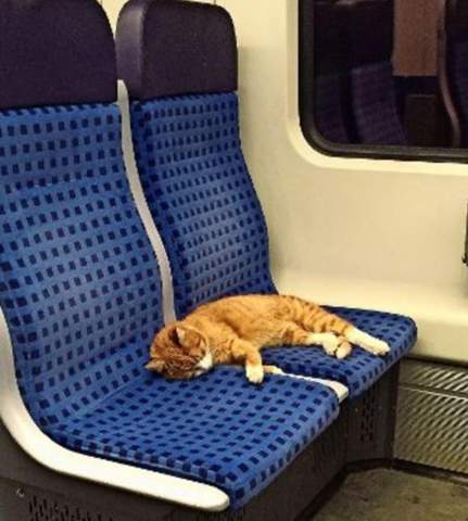 Wo gibt es diese Bahnsitze?