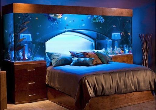 Dieses aquarium - (kaufen, Aquarium)